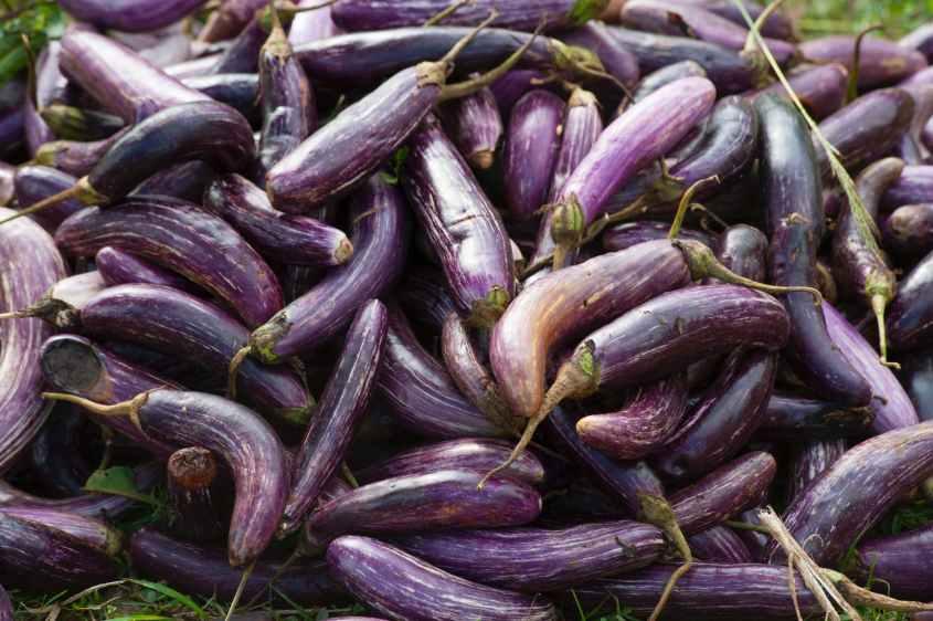 Berinjela e rico em antioxidantes, como nasunin.  tem um alto teor de fibra e potássio.